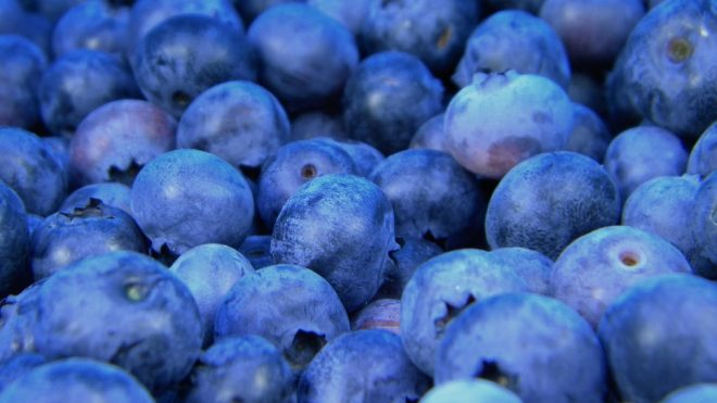 Best Place To Buy Fruit Wholesale in NYC